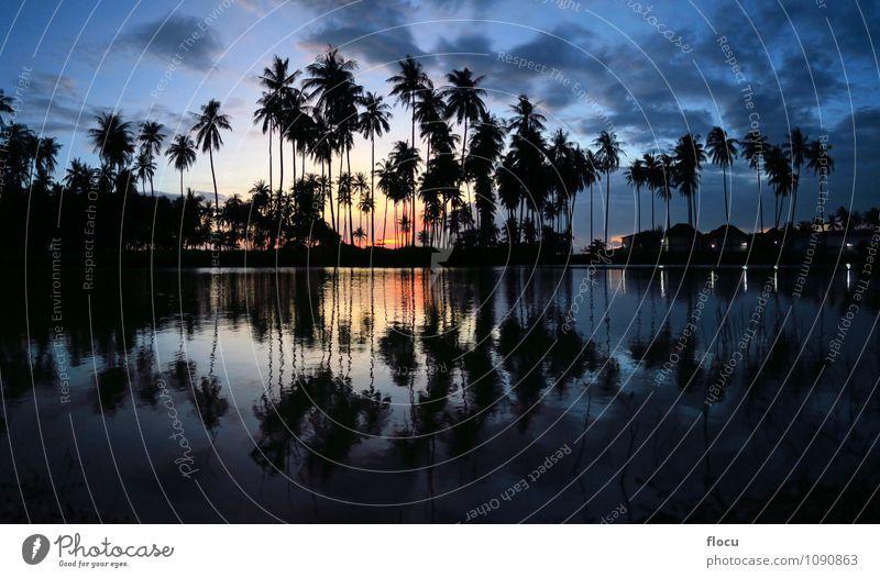 schöne Sonnenuntergangpalmen, die in einem Pool am Strand sich reflektieren Himmel Natur Ferien & Urlaub & Reisen blau grün Farbe weiß Sommer Baum Erholung Meer