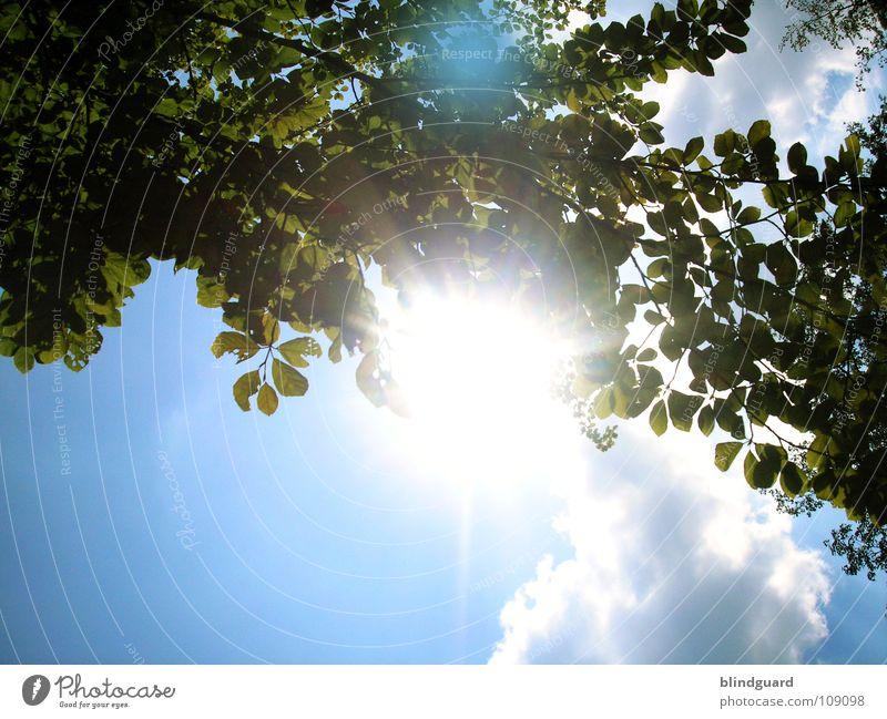 Relax in the sunshine Sommer Indian Summer Baum grün Gegenlicht Licht Wolken Himmel zyan faulenzen Blatt Pflanze Natur Dach Blätterdach hell blenden Sonne
