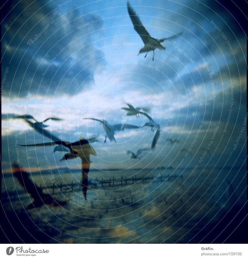 Möwen Vogel See Meer Steg Wolken 2 Holga schreien Schnabel Horizont Wellen Lomografie Himmel fliegen Luftverkehr Natur doppel Doppelbelichtung Flügel Feder