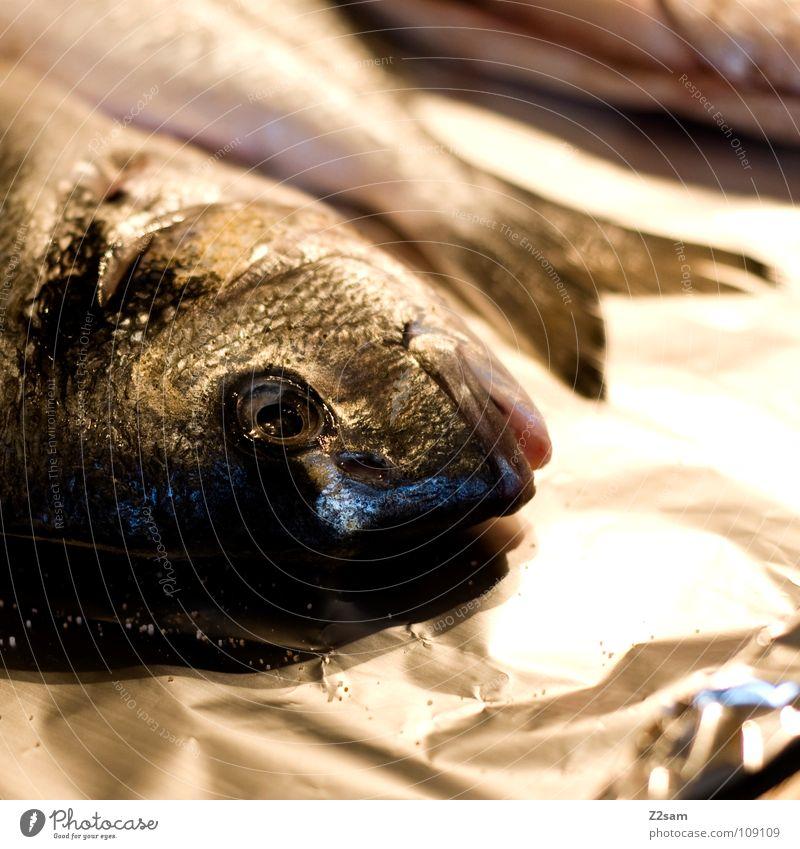 Saturday fisch Samstag Tier Lebewesen kochen & garen Metallfolie 3 glänzend Schwanzflosse Tod Wassertier Abendessen Mittagessen Unschärfe Kieme Ernährung