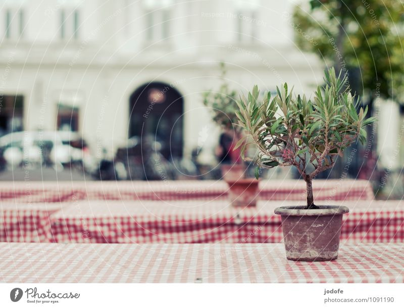 mediterranean feeling Stil Ausflug Gastfreundschaft Tisch kariert rot-weiß Pflanze Baum Zitrusfrüchte Biertische Klapptisch Straßenrand Tod Einsamkeit