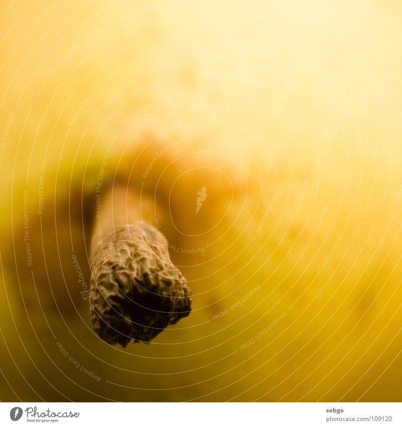 Vitamin-Stängel 4 gelb Stengel braun Pflanze Gesundheit Ernährung Makroaufnahme Frucht Nahaufnahme Birne orange Lebensmittel Sprossachse