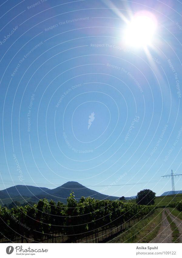 - street of a vineyard - Natur Sonne Sommer Straße Berge u. Gebirge hell Blauer Himmel friedlich Weinberg