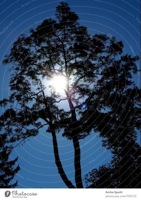 - tree - Baum Sommer Kraft schön Sonne blau Silhouette Natur Himmel