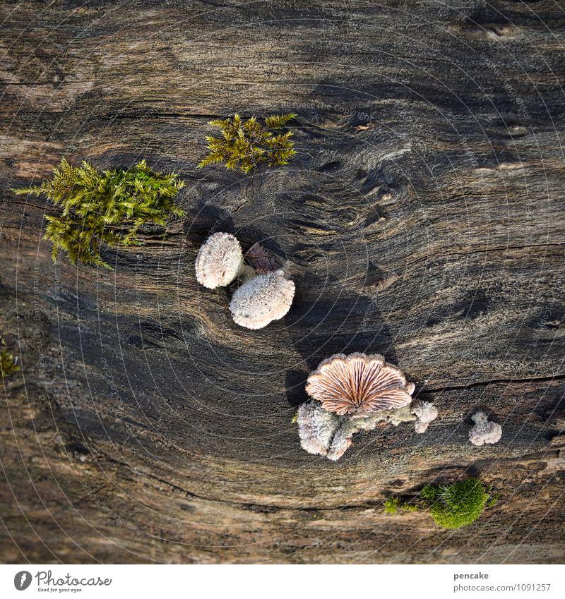 alles an deck! Natur Pflanze Baum Leben Frühling Lebensfreude Urelemente Zeichen Baumstamm Überraschung Moos Pilz Überleben Entschlossenheit Maserung