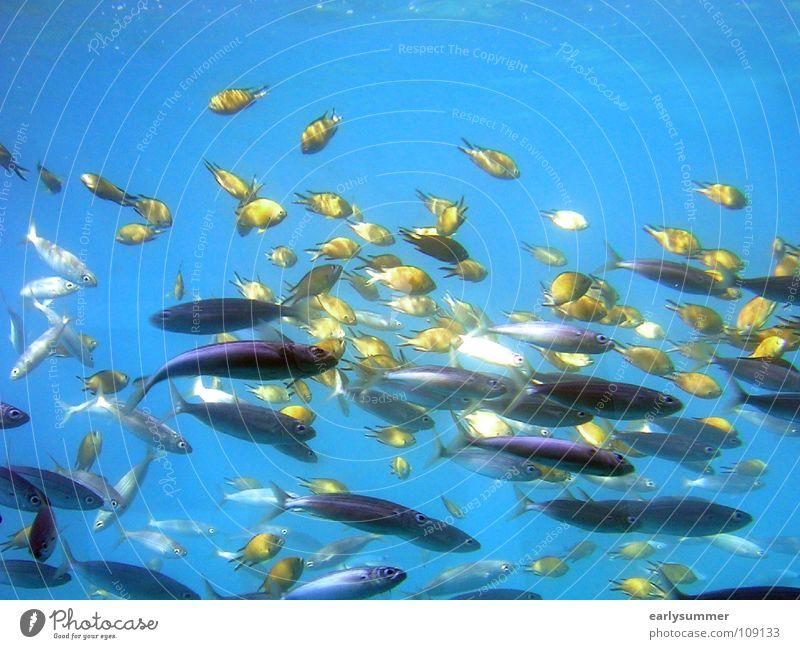 Buntes Treiben blau Wasser Ferien & Urlaub & Reisen schön Sommer Meer Strand Tier träumen Insel nass Ausflug Fisch Bad tauchen Zoo