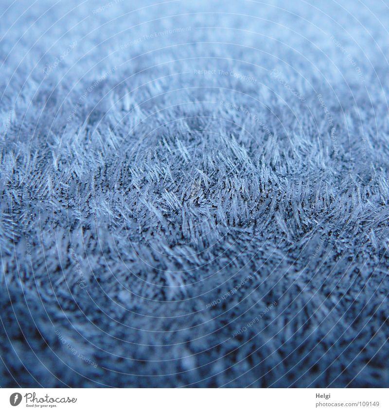 flächendeckender Raureif mit Spitzen Herbst Morgen frieren gefroren Eiskristall kalt feucht weiß Essstäbchen lang dünn vertikal stehen nebeneinander