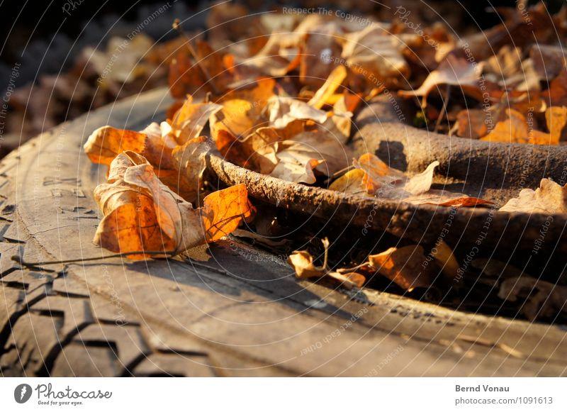 Zeit zu gehen Herbst Blatt Verkehr PKW Rost kaputt Tod stagnierend Reifen Gummi Abschied Reifenprofil Felge Herbstlaub Blattadern Müll entsorgen Farbfoto