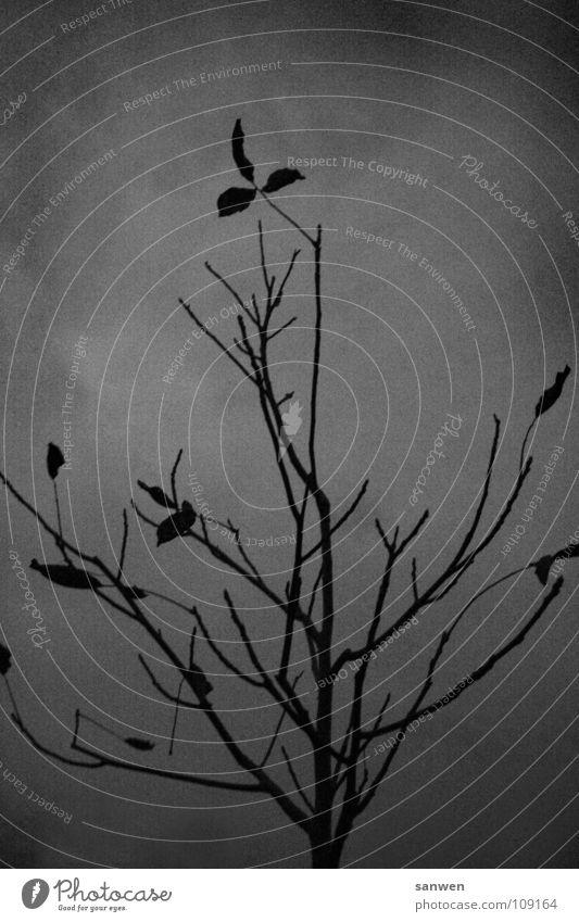 singendes, klingendes bäumchen Baum Dämmerung schlechtes Wetter grau Herbst Blatt dunkel kalt Einsamkeit Trauer Schwarzweißfoto Abend Wolken herbstlich Ast