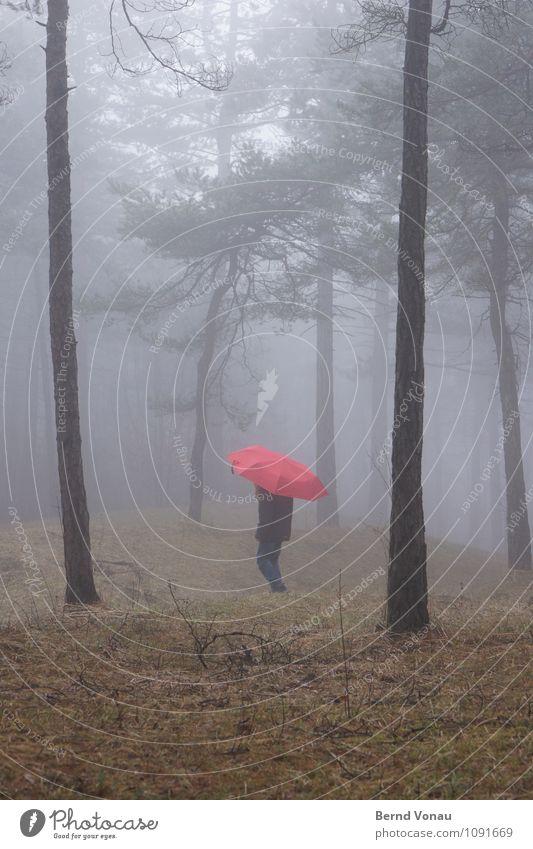 |,| Mensch Kind Mädchen Kindheit 1 8-13 Jahre Umwelt Natur Pflanze Gefühle Stimmung rot Regenschirm Spaziergang gehen Baumstamm Kiefer Wald Gras Nebel verträumt