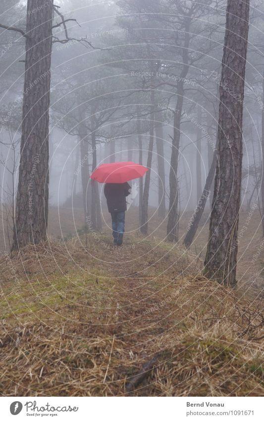 Wasserzeichen | Regenwald Mensch feminin Kind Mädchen Kindheit 1 8-13 Jahre Umwelt Natur Landschaft Pflanze Herbst Winter Klima schlechtes Wetter Nebel Gras