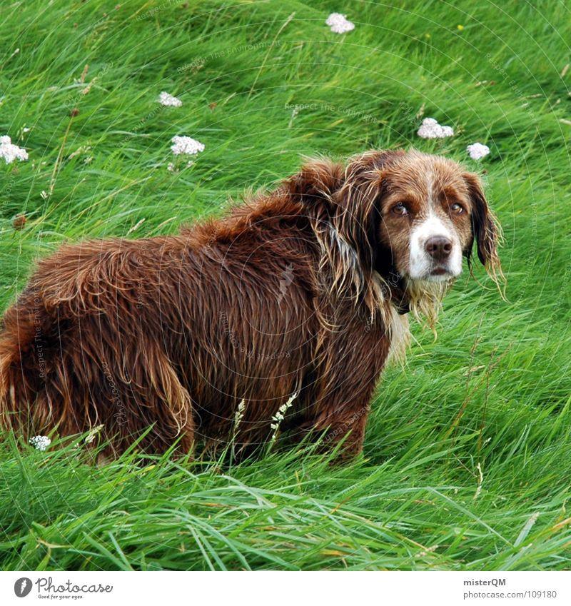 heartbreaking eyes Hund Gras Vertrauen braun Fell Trauer Verzweiflung Tier dog green grün brown