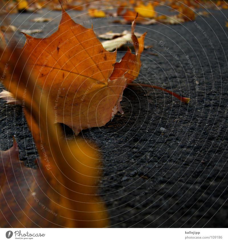 ausfegen Baum Blatt Herbst Wege & Pfade gold Asphalt Kanada Ahorn