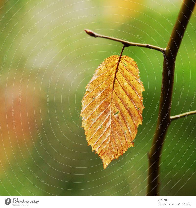 Out of season Natur alt Pflanze grün Baum Blatt ruhig Winter schwarz Wald Umwelt Herbst Zeit Garten braun Park