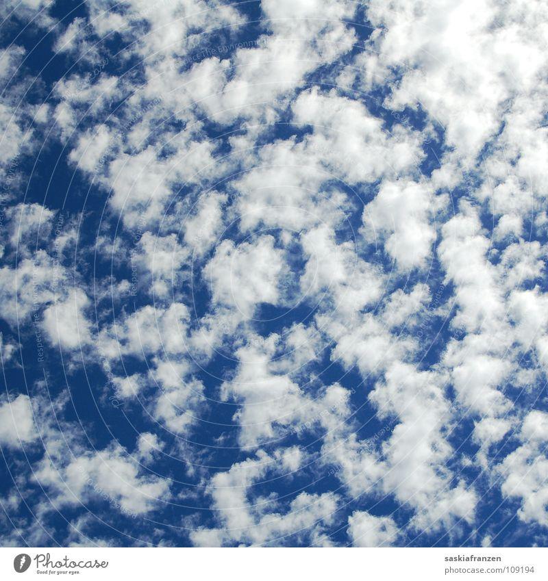 Unentschlossenheit. Himmel weiß blau Sommer Wolken Ferne Herbst Bewegung Wärme Wetter Horizont Zukunft Physik Gedanke ziehen Blauer Himmel