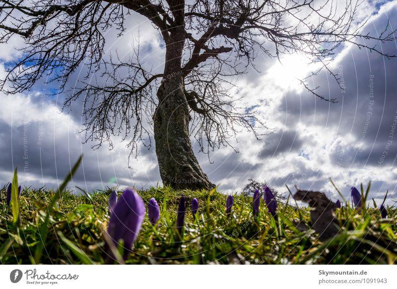Frühling unter dem Baum Natur Pflanze Erholung Blume Blatt Wolken Freude Ferne Umwelt Wiese Gras Blüte Garten Park