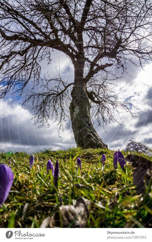 Frühling unter dem Baum Natur Pflanze Sonne Baum Erholung Blume ruhig Wolken Freude Umwelt Leben Gefühle Wiese Gras Frühling Glück