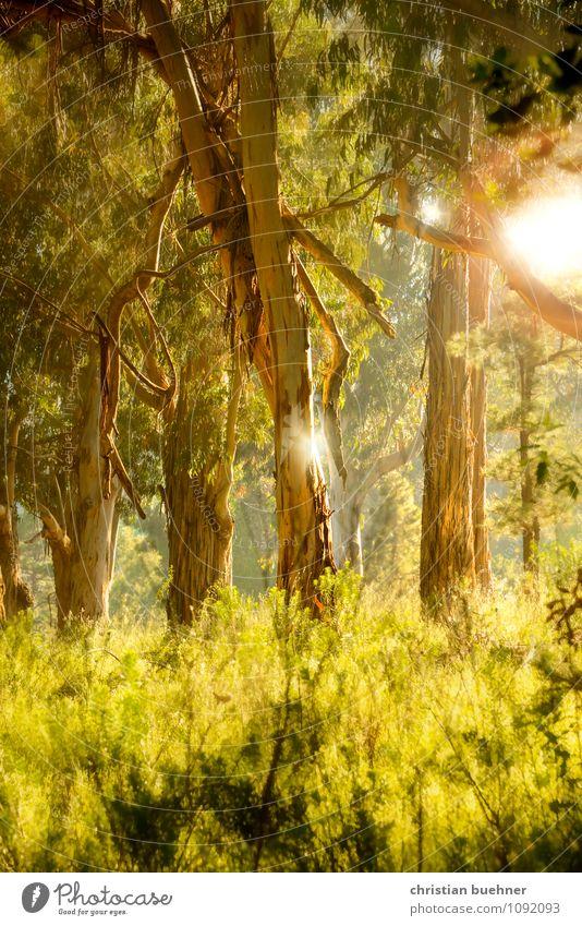 Wald Landschaft Sonne Sonnenaufgang Sonnenuntergang Sonnenlicht Sommer Baum Sträucher Moos Farn Grünpflanze Stimmung Glück Zufriedenheit Lebensfreude