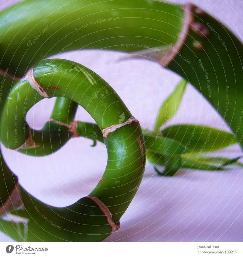 Das Streben streben grün Pflanze rund Spirale aufsteigen grasgrün Wendeltreppe Froschperspektive Geschwindigkeit hoch Turmbau Sportveranstaltung Konkurrenz