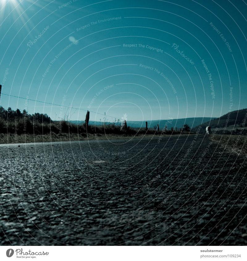 es wird Winter... Herbst Sonnenstrahlen Spaziergang kalt frieren Himmel Natur Rodenbach Blauer Himmel Beleuchtung Straße Wege & Pfade Bürgersteig Grad Celsius