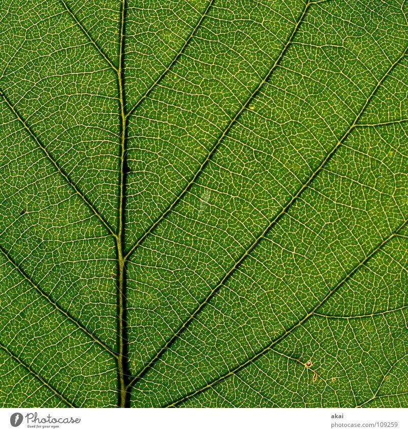 Das Blatt 22 Pflanze Urwald Südamerika Wildnis grün Botanik Pflanzenteile Kletterpflanzen pflanzlich Umwelt Sträucher krumm Gewächshaus Sommer himmelblau Blume