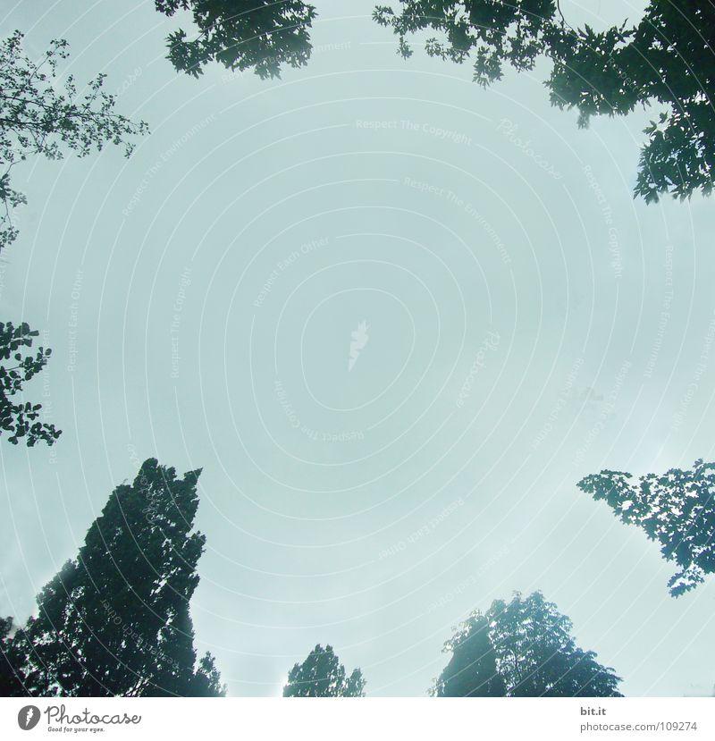 GIPFELTREFFEN Blüte Zeit himmelblau Baum Konjunktur weiß zart Blühend Am Rand Bilderrahmen umrandet Kranz Holzleiste Kunst Wäsche Muster grau türkis hell-blau