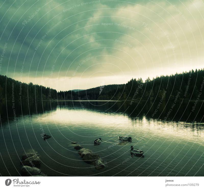 Ruhe und Sturm Abend Abenddämmerung Baum bedrohlich Dämmerung Eis Erholung Erpel Farbenspiel Herbst Horizont kalt Regenwolken ruhig See Reflexion & Spiegelung