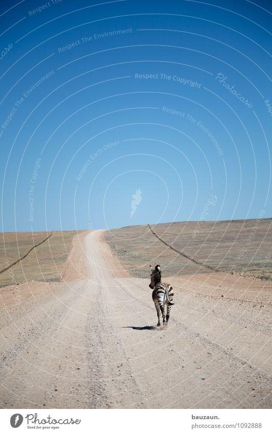 schneller. Himmel Natur Ferien & Urlaub & Reisen Sommer Landschaft Tier Ferne Umwelt Straße Gras Freiheit Linie Angst Erde Kraft Wildtier