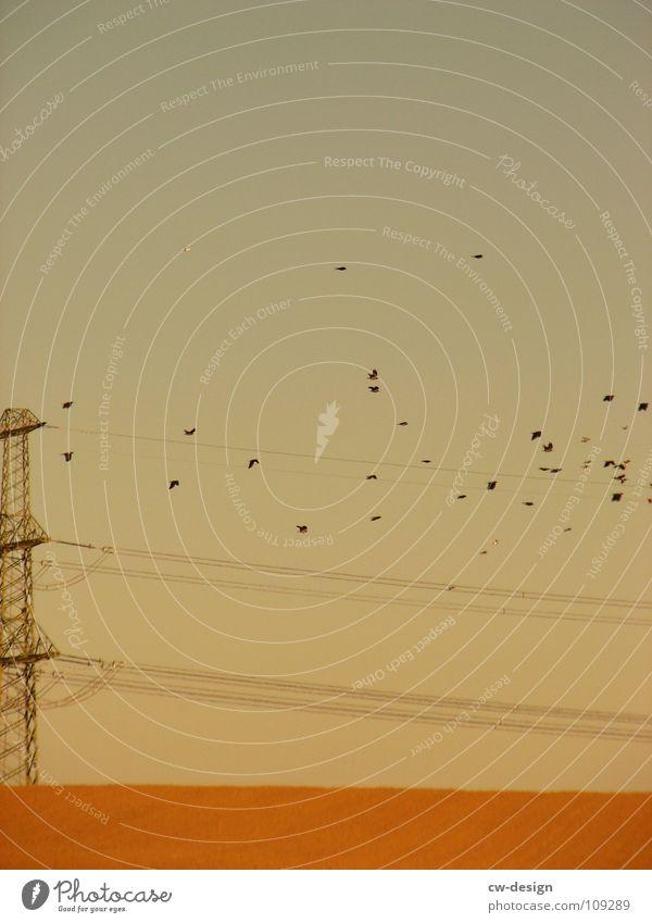 fliegt meine affen, fliegt! Vogel Vogelschwarm Zugvogel Strommast Elektrizität elektrisch Physik angenehm Feld Spaziergang Pendler Luft atmen maskulin wo