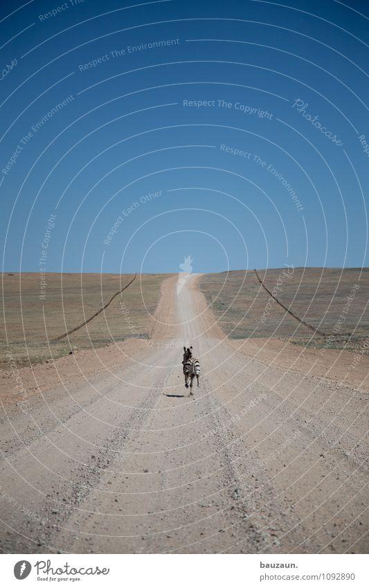 schnell. Ferien & Urlaub & Reisen Tourismus Abenteuer Ferne Freiheit Umwelt Natur Landschaft Erde Himmel Wolkenloser Himmel Sommer Schönes Wetter Gras Namibia