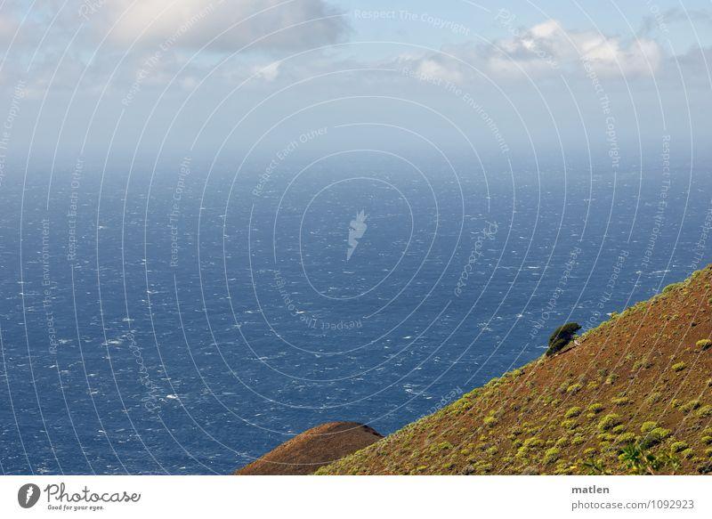 der Letzte Himmel blau Pflanze grün weiß Baum Meer Landschaft Wolken Berge u. Gebirge Frühling braun Horizont Wetter Wellen Wind