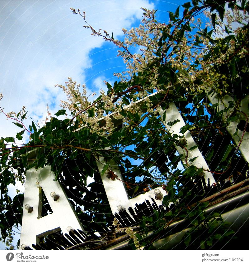 wildwuchs eins Himmel Sonne grün blau Pflanze Blatt Wolken Blüte Schriftzeichen Buchstaben Zeichen Typographie Dachrinne