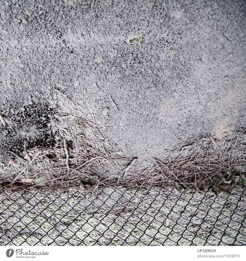 Maschenschneezaun Natur Winter Schnee Maschendrahtzaun grau weiß protestieren Wege & Pfade Ast Boden Perspektive Schneefall Zaun Barriere Schutz Hintergrundbild