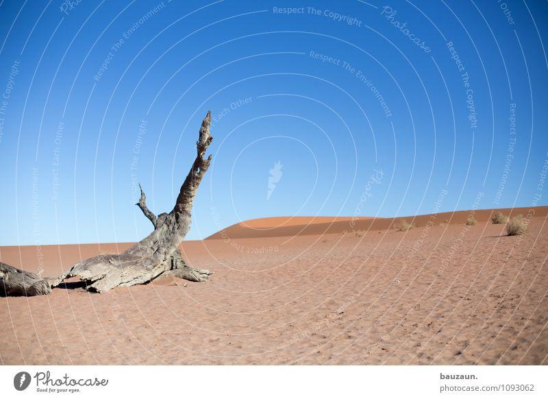das ende. Ferien & Urlaub & Reisen Tourismus Abenteuer Ferne Freiheit Sightseeing Sommer Sonne Urelemente Erde Sand Wetter Schönes Wetter Baum Wüste Namibia