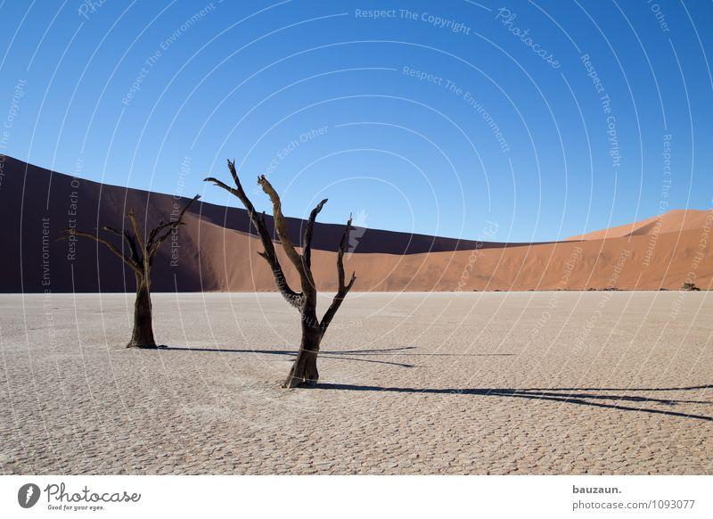 schatten. Himmel Natur Ferien & Urlaub & Reisen Sommer Baum Landschaft Ferne Umwelt Freiheit Sand Wetter Wachstum Erde Tourismus Klima Vergänglichkeit