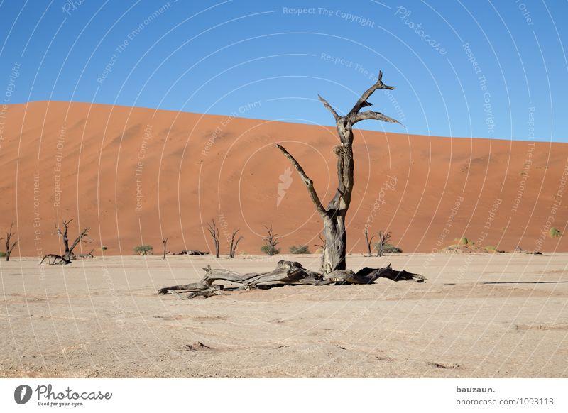 am schrägsten. Ferien & Urlaub & Reisen Tourismus Abenteuer Ferne Freiheit Sightseeing Sommer Umwelt Natur Landschaft Erde Sand Himmel Wolkenloser Himmel Klima
