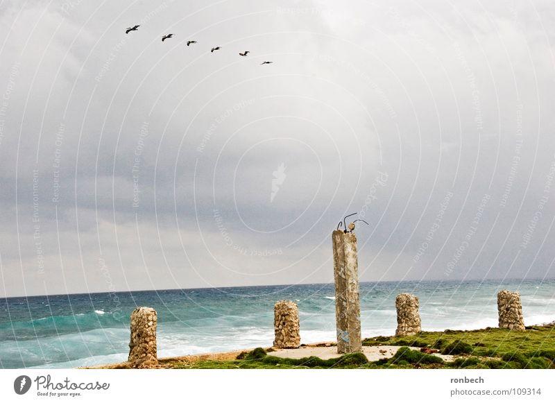 Aufziehender Sturm Himmel Meer Strand Wolken Einsamkeit Herbst grau Regen Vogel Wellen Wind Wetter fliegen trist kaputt