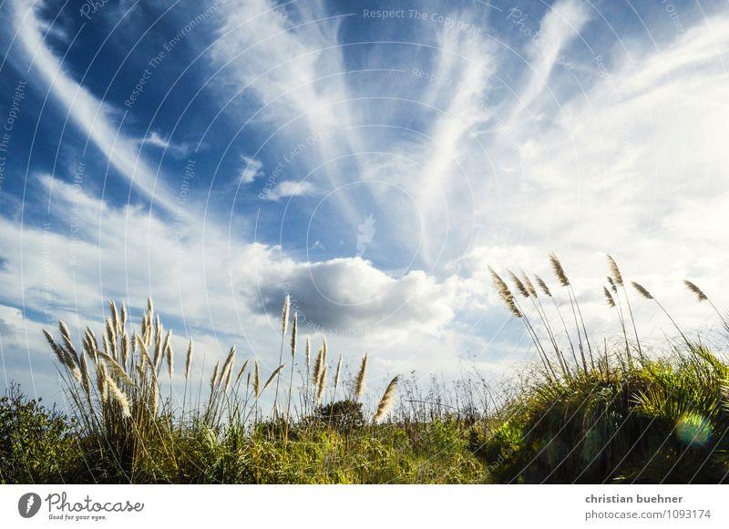 love is in the air Natur Himmel Wolken Sommer Schönes Wetter Pflanze Sträucher Wiese Hügel blau gelb grün weiß Glück Zufriedenheit Lebensfreude Frühlingsgefühle