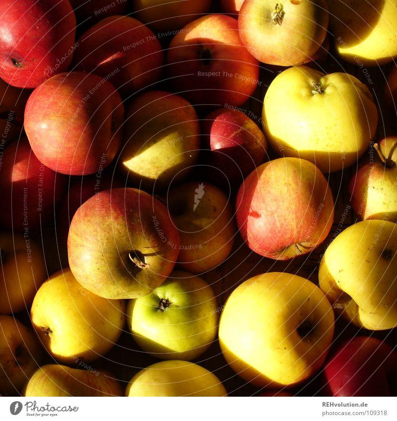 Äpfel Herbst mehrere Haufen rot gelb Futter Baum Apfelbaum Erntedankfest Sünde süß lecker Frucht Gesundheit Schatten viele mengem rotbackig Ernährung Fallobst