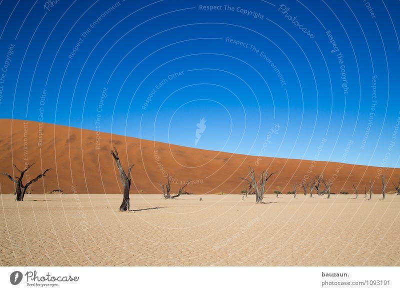 noch schräger. Natur Ferien & Urlaub & Reisen Sommer Sonne Baum Landschaft Ferne Umwelt Freiheit träumen Wetter Wachstum Tourismus Klima Schönes Wetter