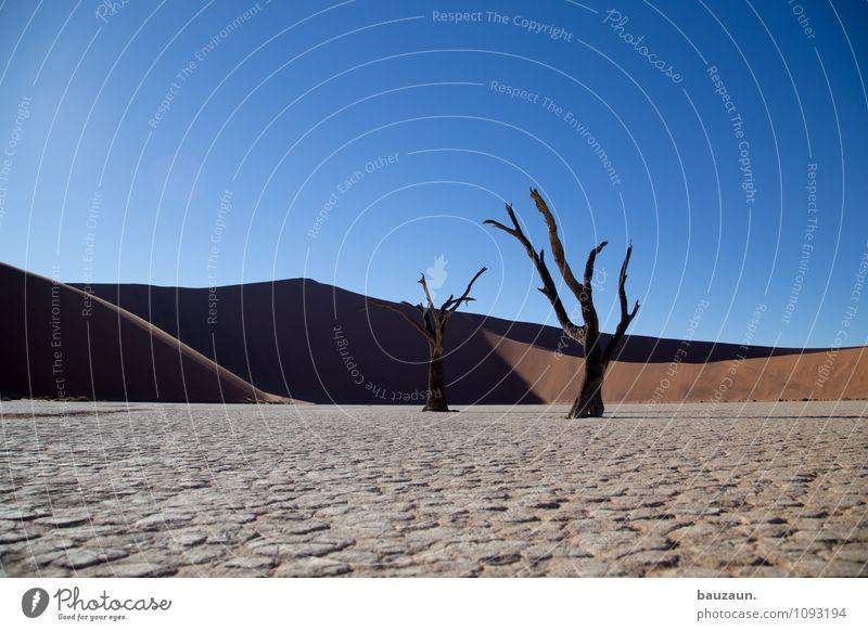 schräg. Natur Ferien & Urlaub & Reisen Sommer Sonne Baum Landschaft Ferne Umwelt Freiheit Wetter Wachstum Tourismus Klima Vergänglichkeit Schönes Wetter