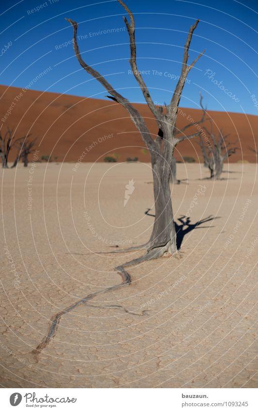 unter der erde. Himmel Natur Ferien & Urlaub & Reisen Sommer Sonne Baum Landschaft Ferne Umwelt Tod Freiheit Sand Wetter Wachstum Erde trist