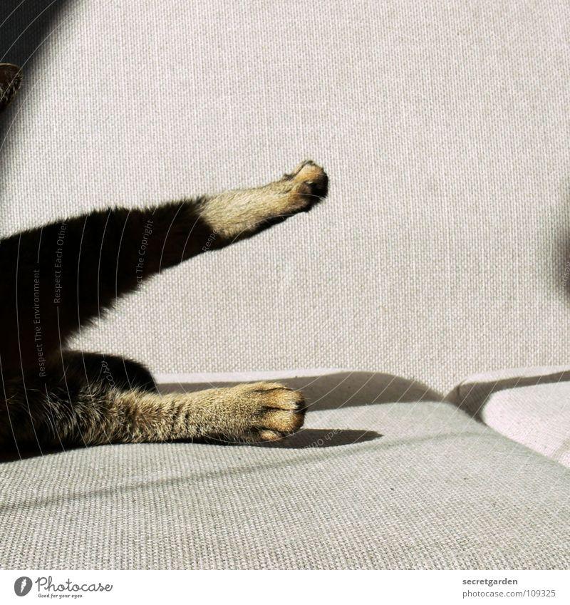 morgengymnastik Sofa Katze Tier Krallen Katzenpfote Pfote Erholung Reinigen lutschen ausgestreckt hängen gestreift Stoff Physik kuschlig grau gemütlich lümmeln