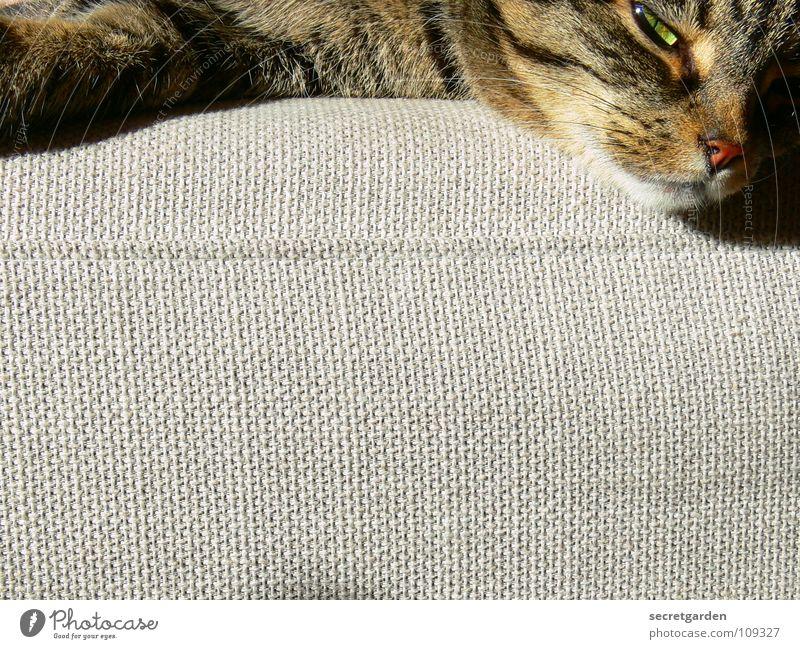 doch noch ein schläfchen nach der morgengymnastik.... Sofa Katze Tier Erholung ausgestreckt hängen gestreift Stoff Physik kuschlig grau gemütlich lümmeln