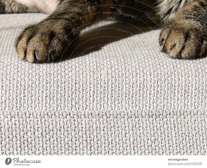 noch eine pfotenmaniküre? ruhig Tier Erholung grau Katze Wärme Fernsehen liegen Physik Häusliches Leben Sofa Stoff Möbel Wohnzimmer Verkehrswege gemütlich