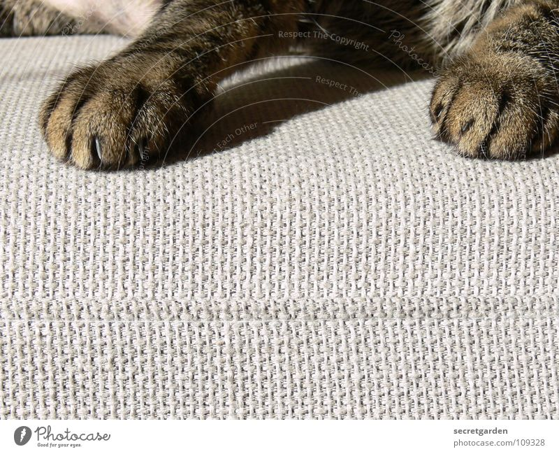 noch eine pfotenmaniküre? Sofa Katze Tier Krallen Katzenpfote Pfote Erholung ausgestreckt hängen gestreift Stoff Physik kuschlig grau gemütlich lümmeln