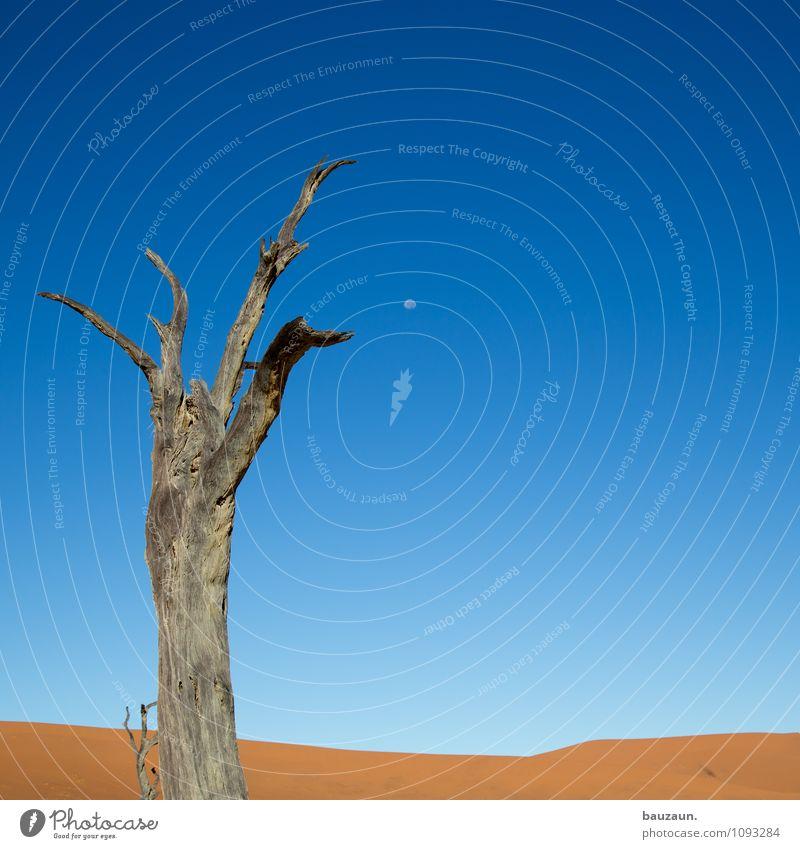 dead vlei². Himmel Natur Ferien & Urlaub & Reisen Sommer Baum Landschaft Ferne Umwelt Gefühle Freiheit Stimmung Sand Wetter Wachstum Erde Tourismus