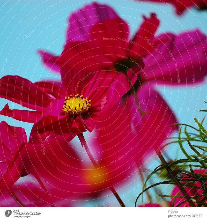 Blüm'schen Himmel Natur Baum grün schön blau Pflanze Sommer Blume Tier Leben springen Blüte Umwelt Frühling Wärme