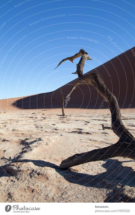 baumfriedhof. Natur Ferien & Urlaub & Reisen Pflanze Sommer Sonne Baum Landschaft Ferne Umwelt Tod Holz Freiheit liegen Wetter Wachstum Tourismus