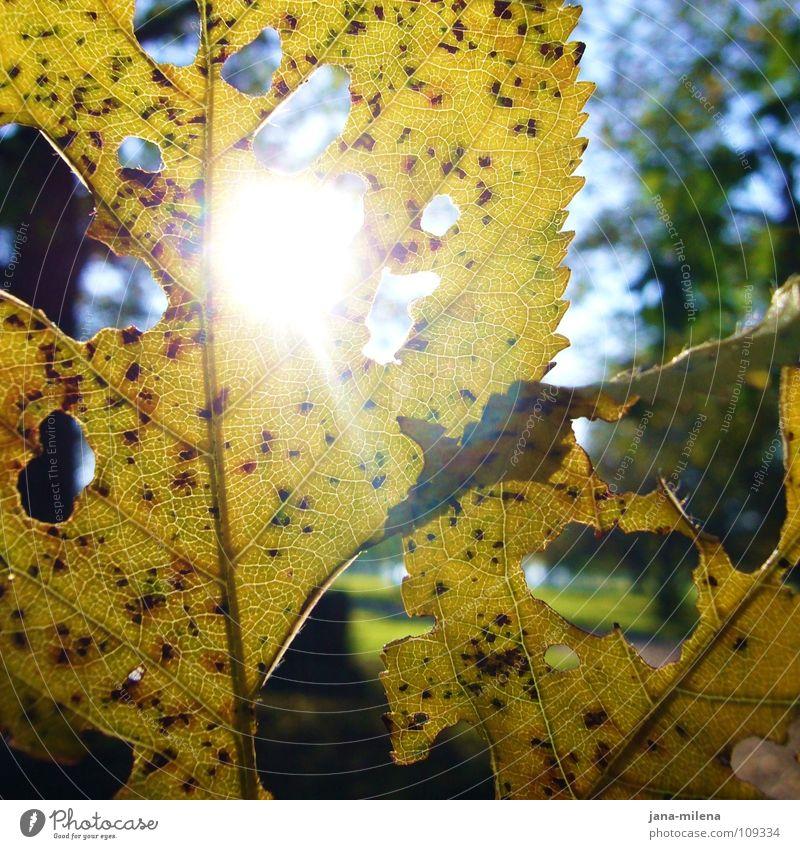 Lichtstrahlen blau Wasser grün Sonne Blatt gelb Herbst Spaziergang verfallen Loch Herbstlaub herbstlich Blattadern Lichtstrahl Wintersonne Waldspaziergang